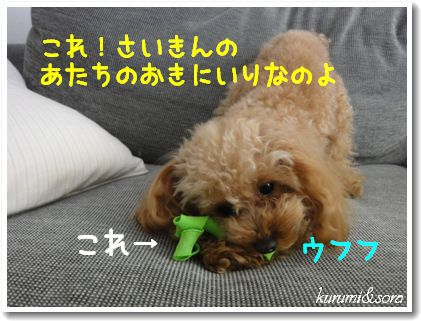 a3_20101201153724.jpg