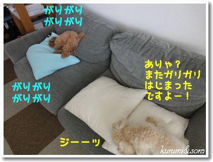 a3_20101204105507.jpg