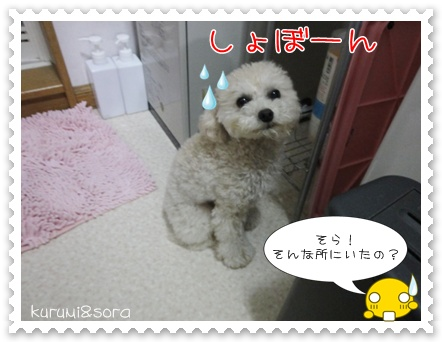 a3_20110426194308.jpg