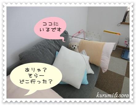 a4_20110101194214.jpg