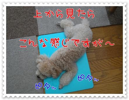 a4_20110727183246.jpg