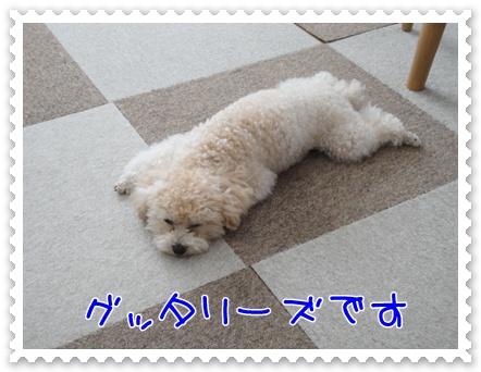 a4_20110810214424.jpg