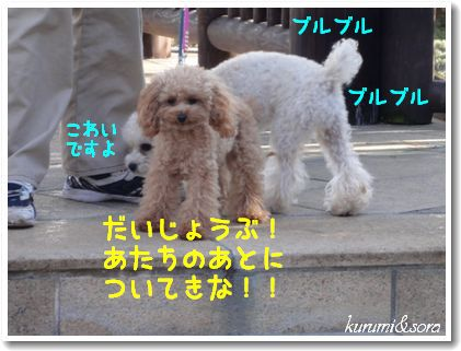 a5_20101125152147.jpg
