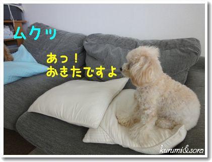 a5_20101204105509.jpg