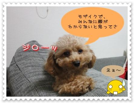 a5_20110107185922.jpg