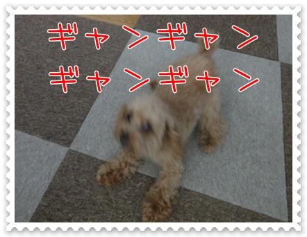 a5_20110217200340.jpg