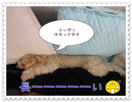 a5_20110329202519.jpg