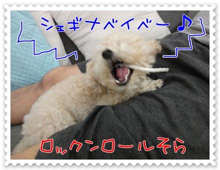 a5_20110706193659.jpg
