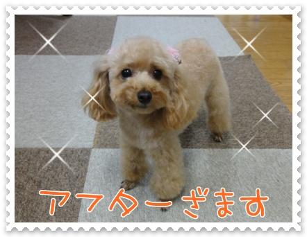 a5_20110823211116.jpg
