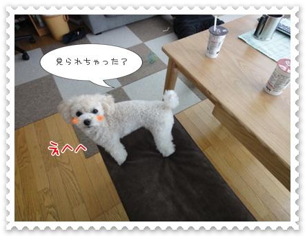 a5_20111023120107.jpg