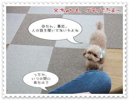 a5_20111208235040.jpg