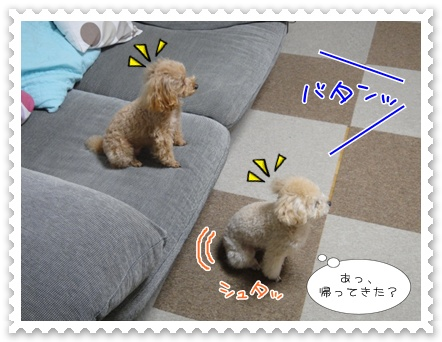a5_20111227220146.jpg