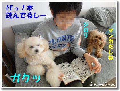 a6_20101129214007.jpg