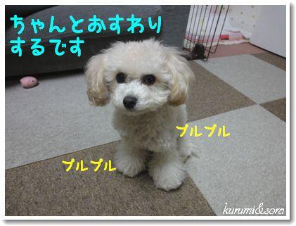 a6_20101217185259.jpg