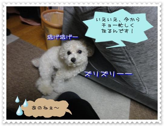 a6_20110115111855.jpg