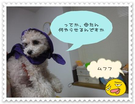 a6_20110124204032.jpg