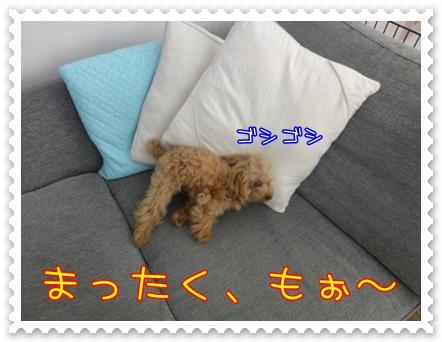a6_20110209180001.jpg