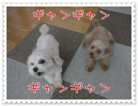 a6_20110217200339.jpg