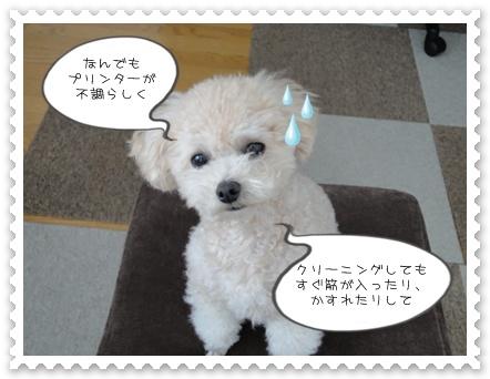 a6_20111224125838.jpg