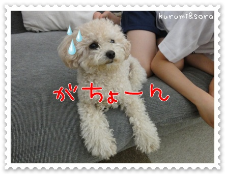 a7_20110528113812.jpg