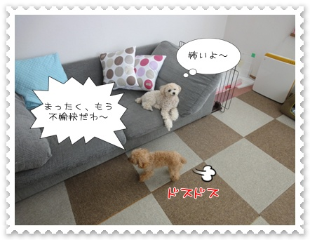 a7_20110730111041.jpg