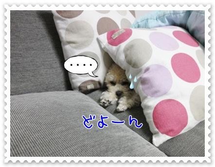 a7_20111119094925.jpg