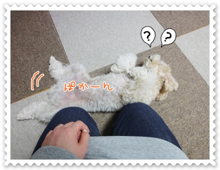 a7_20111203110438.jpg