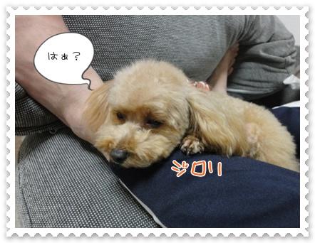 a7_20111221153211.jpg