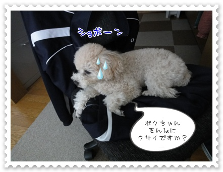 a7_20111229192703.jpg