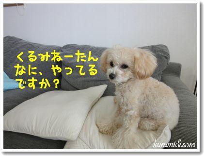 a8_20101204105703.jpg