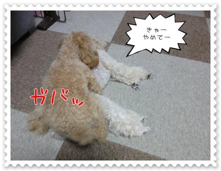 a8_20110727183509.jpg