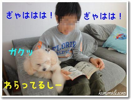 a9_20101129214052.jpg