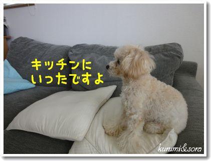 a9_20101204105703.jpg