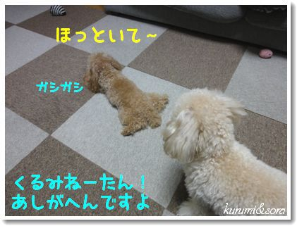 a9_20101217185300.jpg