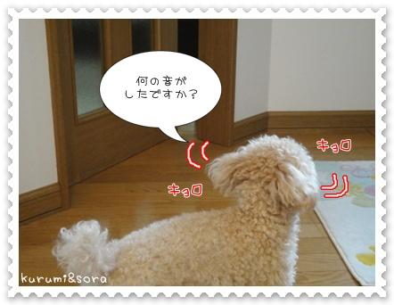 a9_20110515203702.jpg
