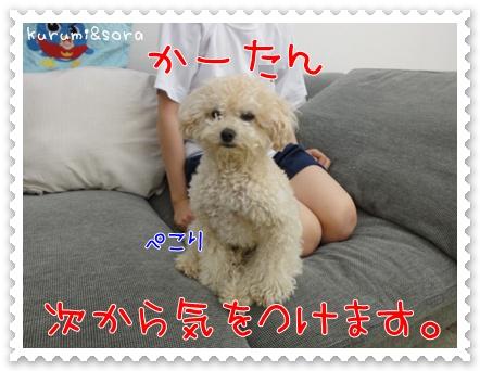 a9_20110528113811.jpg