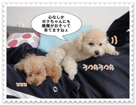 a9_20111225194255.jpg