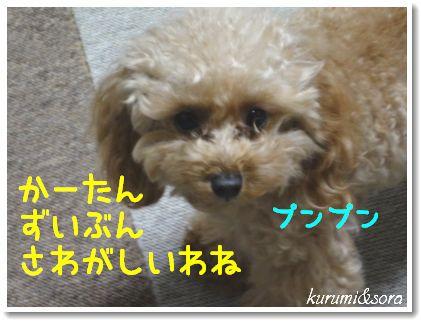 b10_20101127153111.jpg