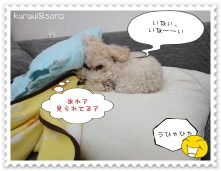 b10_20110121233557.jpg