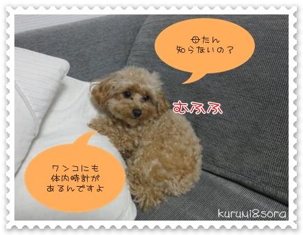 b10_20110310211044.jpg