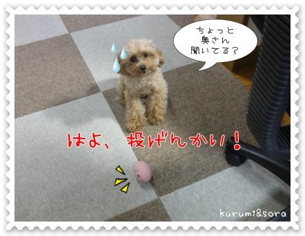 b10_20110517183802.jpg