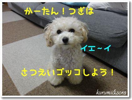 b11_20101127153109.jpg
