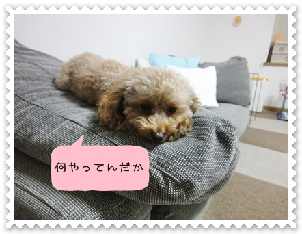 b11_20110110015051.jpg