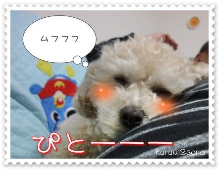 b11_20110129172809.jpg