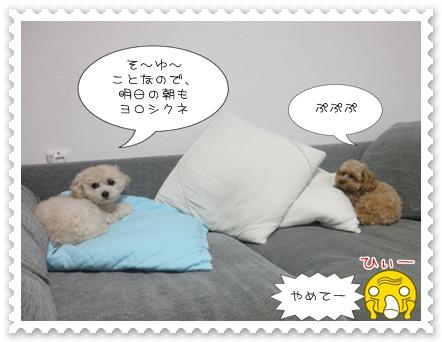 b11_20110310211043.jpg