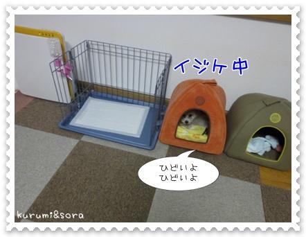 b11_20110505144749.jpg