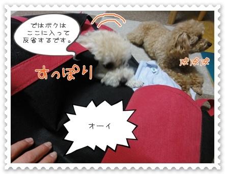 b11_20110806191155.jpg