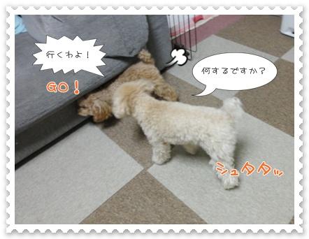 b11_20120129164936.jpg