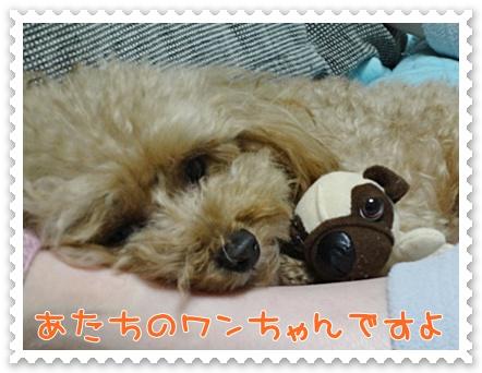 b11_20120204160610.jpg