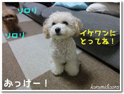 b12_20101127153108.jpg